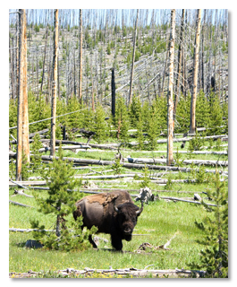 """""""Und dann wird ein Büffel anfangen, dumm in ihre Seele zu starren, während er langsam Gras kaut und leise furzt."""""""